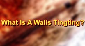 Walis Tingting: What Is It Made Of & More! (Filipino Broom)