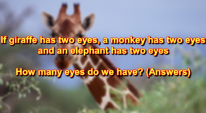 If A Giraffe Has Two Eyes Answer – Explanation And More