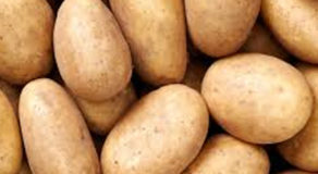 What Is The Scientific Name Of Potato? (ANSWER)