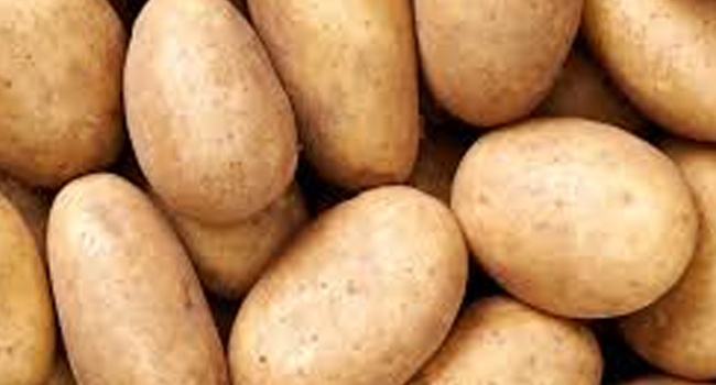 SCIENTIFIC NAME OF POTATO