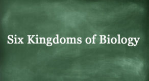 What Are The Six Kingdoms Of Biology? (ANSWER)