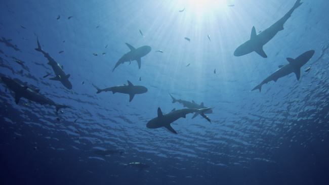 Sam And Sarah Saw Seven Sharks (How Many S's Riddle, Answers)