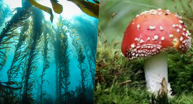How Are Seaweeds Mushrooms Related? (Answers)