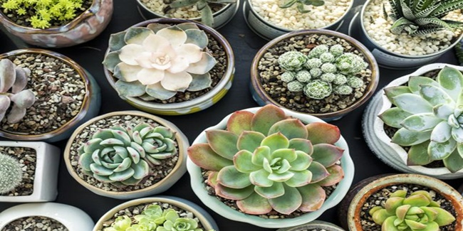 How To Water Succulents 2