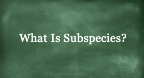 What Is Subspecies? About The Term In Science (ANSWER)