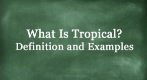 What Is Tropical? Definition And Usage Of This Term