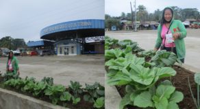 Agusan del Sur Fill Road Center Islands with Vegetables Earn Reactions Online