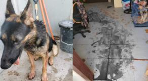 Family Dog in Cebu Mauled Burglar, Prevent Plan to Rob the House