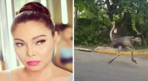 K Brosas Has This Epic Reaction To 'Adobong Ostrich'