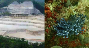Dolomite Destroys Cebu Corals In Southern Town Of Alcoy Cebu