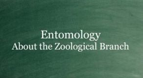 What Is Entomology? About The Branch Of Zoology