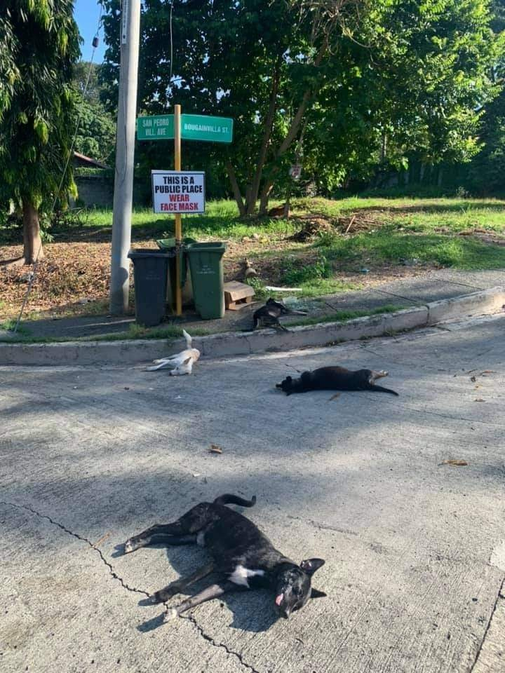 Security Guard Poisoned Dogs