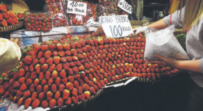 Strawberry Festival In La Trinidad, Benguet Cancelled