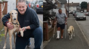 Owner Learned His Pet Dog Fakes Limp Out of Sympathy for His Injury