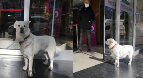 Pet Dog Spent Days Outside Hospital Patiently Wating for Sick Owner