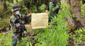 PDEA, PNP Operatives Seized P8-M Worth of Illegal Drug Plants in Kalinga