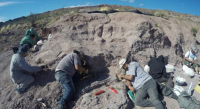 Fossils Of Oldest Huge Dinosaur Group Member Discovered In Argentina