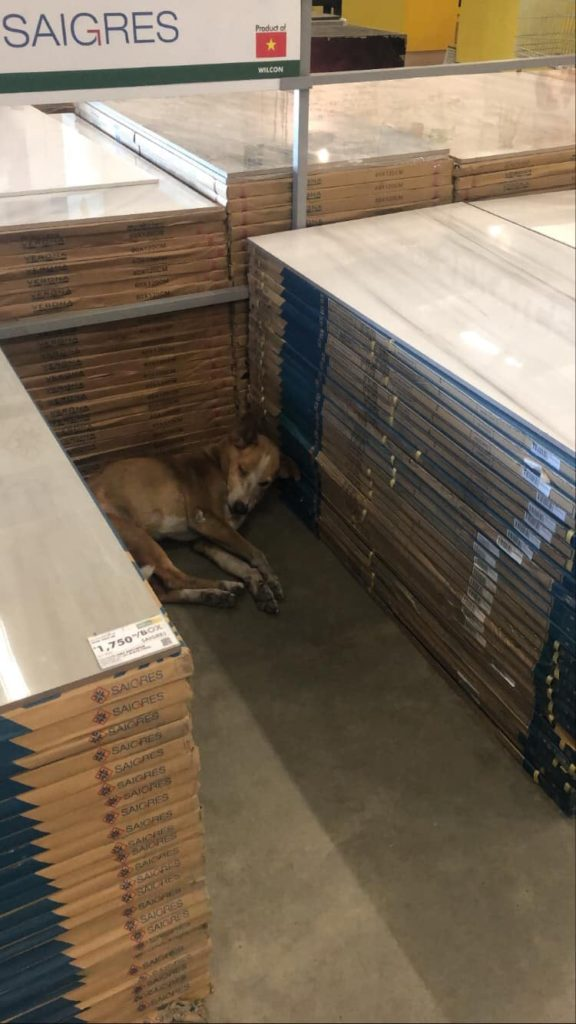 Hardware Store Stray Dogs