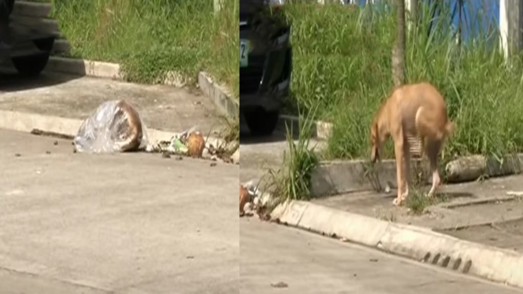 Poisoned Dogs in Bacolod