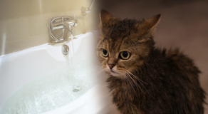 Japanese Man Jailed After Forcing His Pet Cat to Swim in a Bathtub